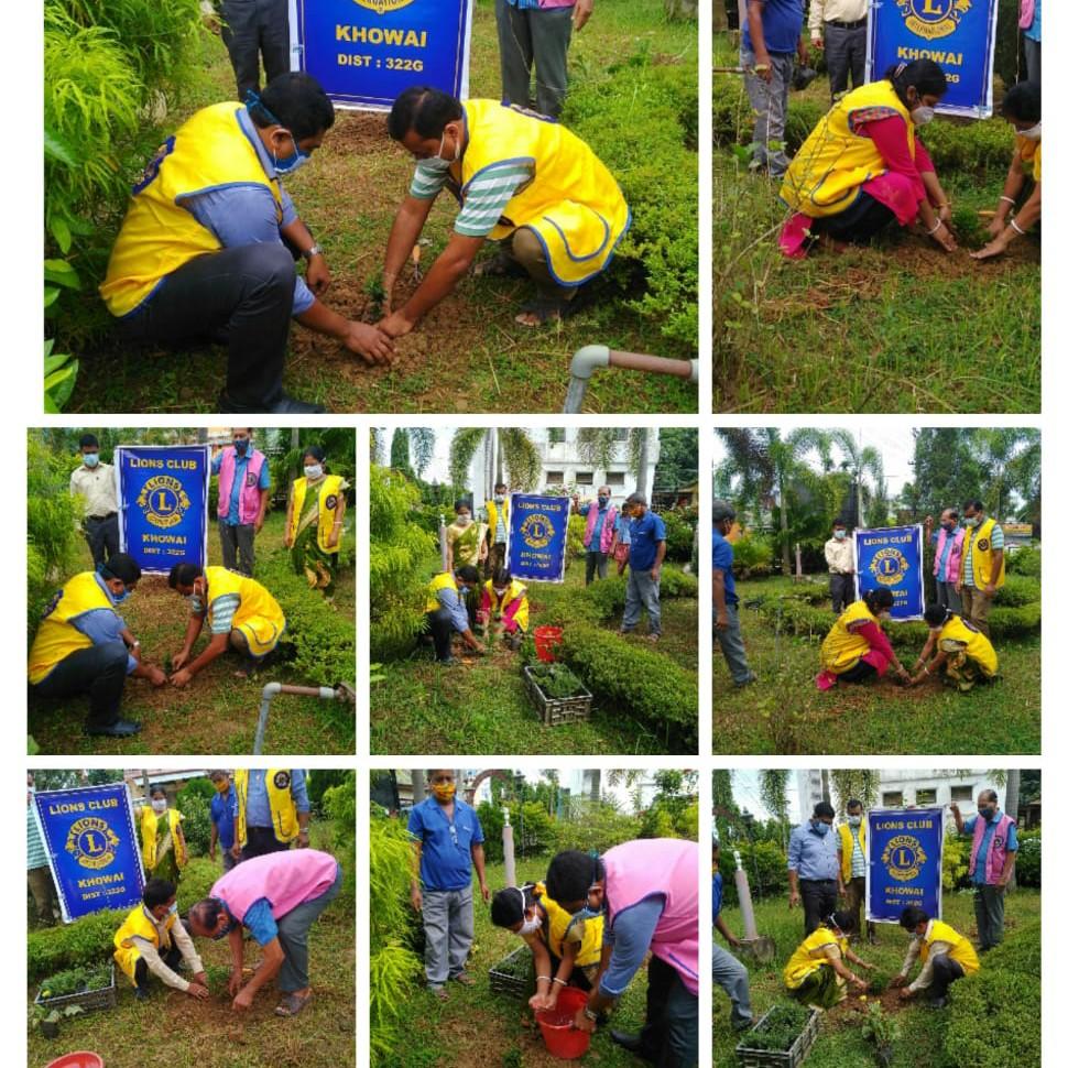 Tree Plantation and Tree Conservation.