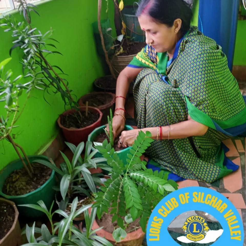 TREE PLANTATION AND TREE CARE