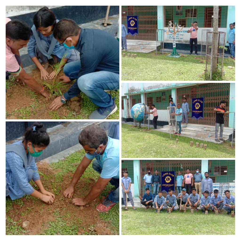 Tree plantation and tree Conservation