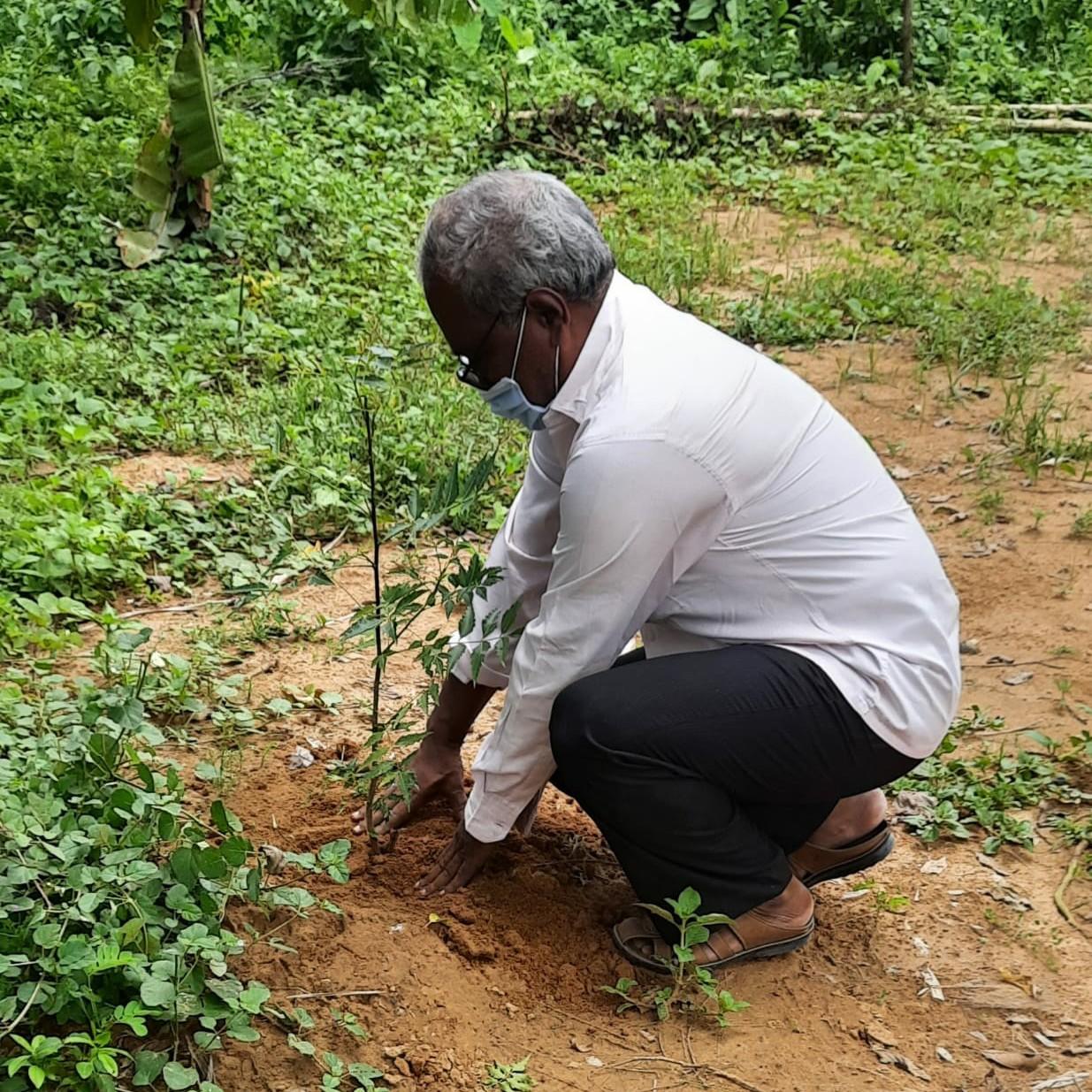 Tree plantation day 6
